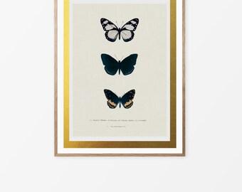 Butterfly, Printable Art, Prints, Poster, Wall Art, Art, Home Decor, Digital Prints, Instant Download, Bedroom Decor, wall Art Prints.