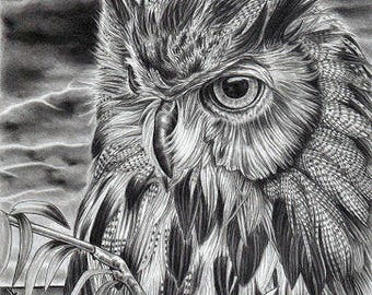 Long Eared Owl in a Storm Original A4 Pencil Portrait by Karena Higton
