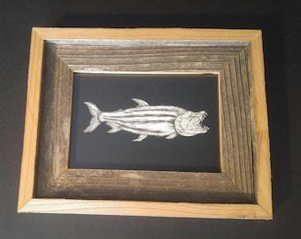 Fish on Scratchboard: Striped Tigerfish