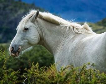 White Horse, Patagonia, Chile