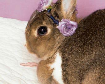 Aesthetic Rose Stud Pet Flower Crown