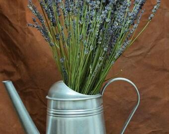 Super Blue Dried Lavender | Wedding Lavender | Lavender Bouquets | Giant Hidcote Lavender | 50 Stems Lavender | French Lavender