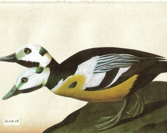 Beastiary Art, Two Headed Duck Artwork, Freaky Animal Freak of Nature, Natural Curiosity, Unnatural History Oddity, Weird Thing Collage