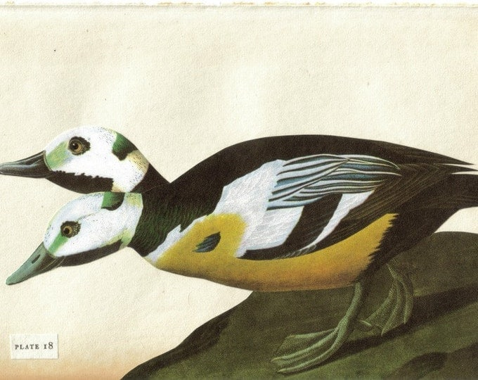 Curious Creature Animal Oddity, Duck Artwork, Beastiary Art Collage