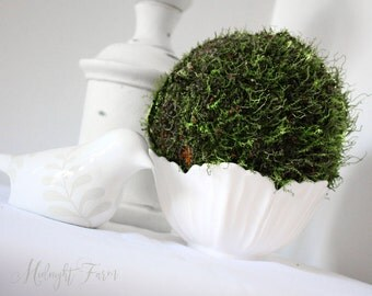 Live Moss Topiary and Terrarium Tutorial | Holiday Table Setting | INSTANT DOWNLOAD