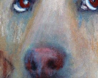 original art  aceo drawing yellow lab Labrador retriever