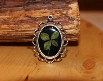 Real Four Leaf Clover for St. Patrick's Day to bring Good Luck