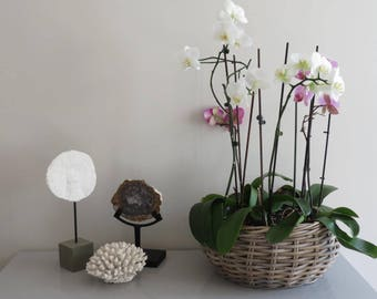 Large Grey Washed Wicker Planter - Indoor / Outdoor