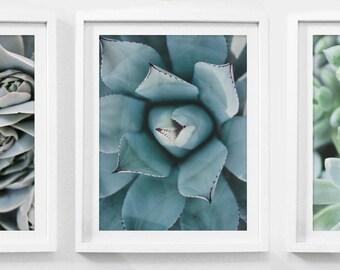 Set of 3 Prints, Botanical Set, Printable Art Set, Set of 3, Set of 3 Wall Art, Botanical Print Set, Cactus Print Set, Succulent Downloads