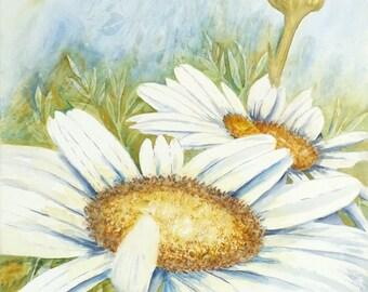 Spring Daisys ll