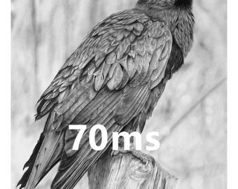 Raven - 8x10 Signed Art Print of Pencil Drawing by 70ms - Raven, Crow, Corvid, Nevermore, Edgar Allen Poe