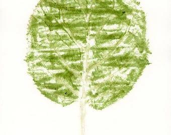 Hydrangea Leaf II