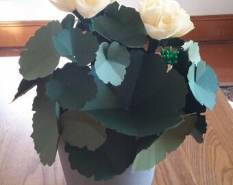 Paper Geranium Plant
