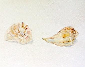 Island Sea Shells watercolor GICLEE seashell beach cottage home decor matted 11x14