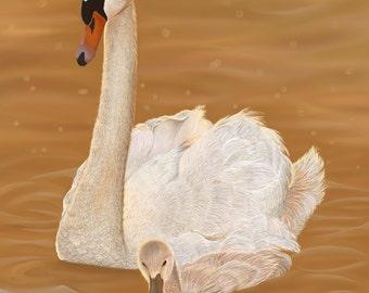 Swan on Placid Lake