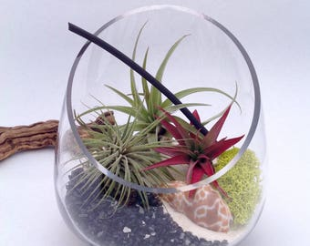 DIY Air Plant Terrarium (Medium Slanted Vase)
