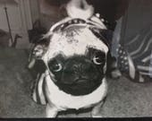 Wool Slippers with dog Pug portrait