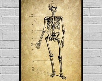 Antique Skeleton print, Old Paper, Vintage Dictionary page, Skeleton poster, Vintage Skeleton Art, Victorian Skeleton print V21