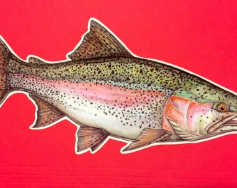 "8"" Rainbow Trout Decal"