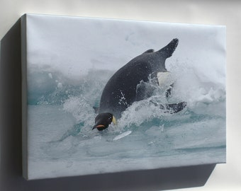 Canvas 24x36; Emperor Penguin Dives Into The Water Somewhere In Antarctica