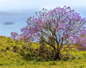 Jacaranda Tree with Molokini in the background