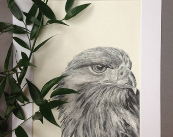 Golden Eagle, Ink Portrait