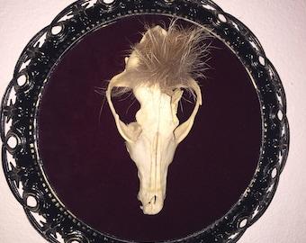 Fantastic Mr. Fox mounted skull