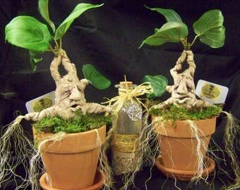 Mandrake sculpture in clay pots