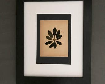Herbarium Specimen Botanical Art. Real Pressed Herbarium. Black and White Framed Botanicals
