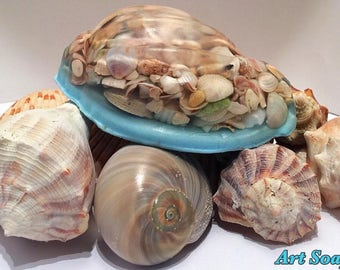 SEASHELL SOAP,sea shells,shells,shell art,beach,ocean,sea,coastal,island,beach decor,sea shell art,beach bathroom,shell decor,shells,beach