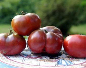 3 - Cherokee Purple Heirloom Tomato Plants