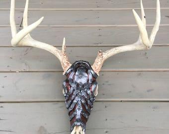 """Deer Skull with """"war armor"""""""