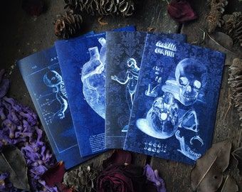 Macabre Medical Art, Skeleton Skull, Anatomical Heart, Conjoined Twins, and Witchcraft Circle, Gothic Oddity, Luxury greeting card 4 pack.