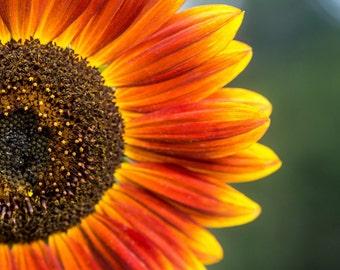 Sunflower Series 1/4 - Vertical