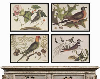 Bird Print SET of 4 - Bird Prints - Birds Wall Art - Birds Wall Decor - Birds Illustration - Birds Art - Birds Gallery Wall - Bird Posters