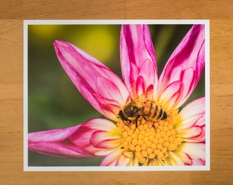 Photo Print of Pink Dahlia with Honey Bee from DebSladekPhotography