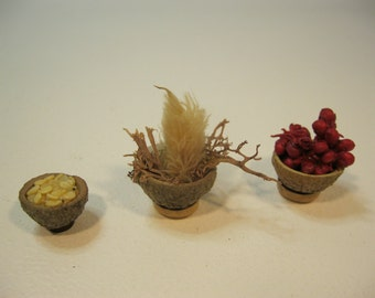 Miniature real acorn cup displays