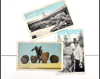 3 Vintage Unused Tarpon Springs, FL Postcards - Sponge Exchange Post Cards