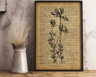 Botanical Art Decor, Flower Dictionary Art Print, Botanical Illustration, Vintage Wall Art, Nature botanical print, Office Decor (F02)