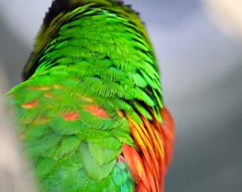 Bright Green and Red Bird