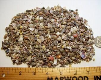 1 Full Cup Seashells Tiny Beach Sea shells crafts