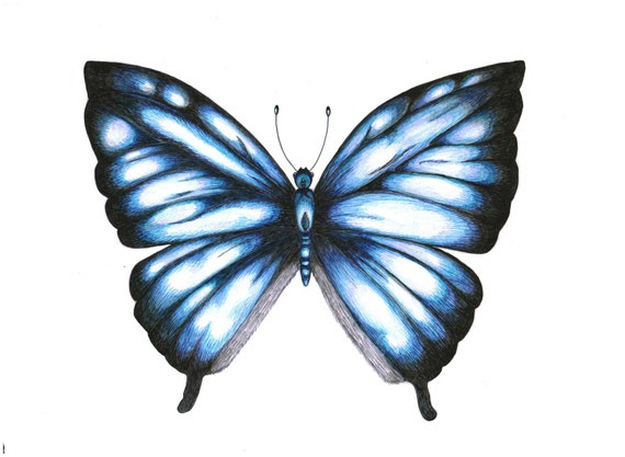 Original Pen & Colour Pencil Illustration of a Big Blue Butterfly, Clipart, Crafting, Card Making, Scrapbooking