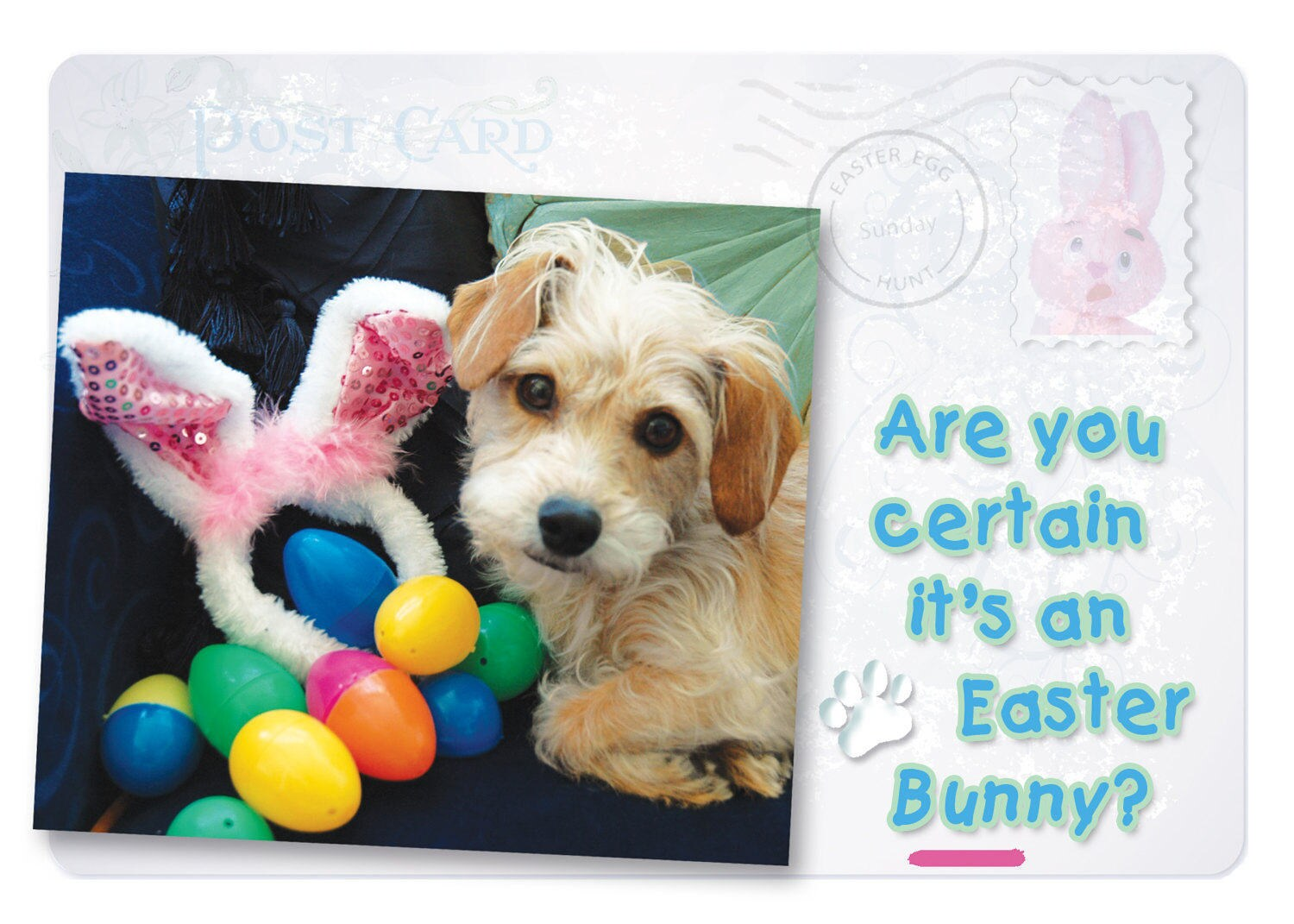 Dog greeting cards funny easter cards easter cards zoom kristyandbryce Choice Image