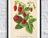Vintage strawberry print berry botanical print illustrations boho print vintage antique print wall art print kitchen decor poster red green