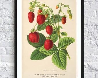 Vintage Strawberry Print Berry Botanical Print Illustrations Boho Print Vintage Antique Print Wall Art Print Kitchen
