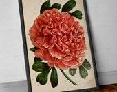 Paeonia in Pink   Botanical Tree Giclée Print, tree wall hanging botanic poster. Reproduction Poster Art, Rose, Pink Flower Wall Art