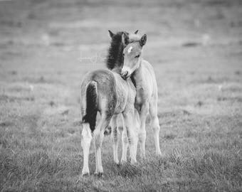 Two Foal Best Friends - Horse Photography (Large Equine Fine Art Print)