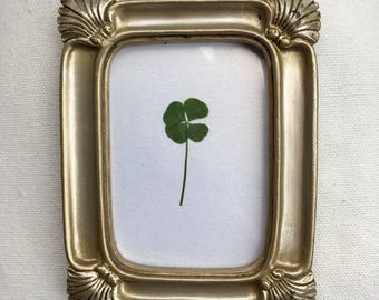 Real Four Leaf Clover in Small Gold Frame (Rectangle)