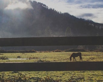 Horses in the Mountains, Quinault, WA - Full Color Photography Wall Art Cavas Print