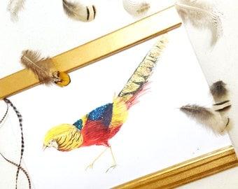 Golden Pheasant Art Print - Natural Collection